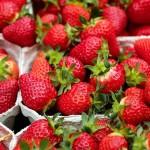Pěstujeme jahody –  výsadba nových sazenic