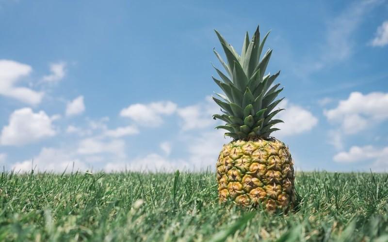 ananas pxb