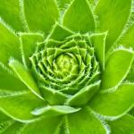 JAK NA NETŘESKY: o pěstování a léčivých účincích